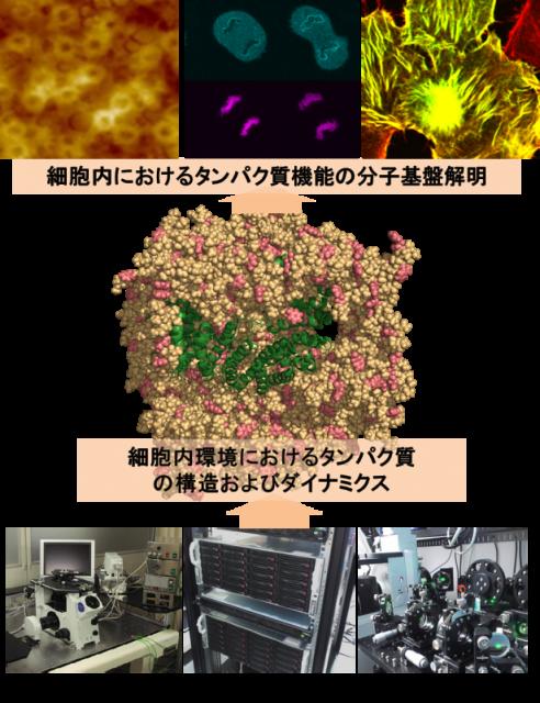 yohimura_j