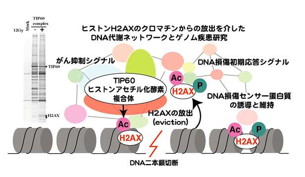 井倉研究室図